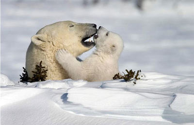 Polarlove