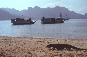 Komodoboats